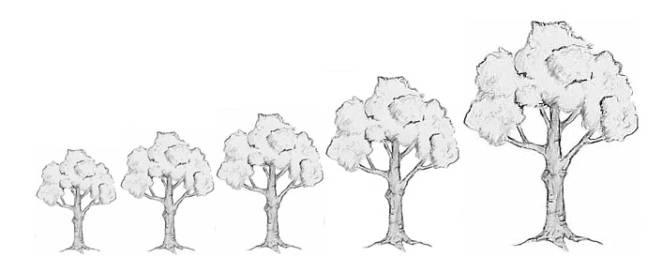 This chart shows the approximate size of trees on different rootstocks.